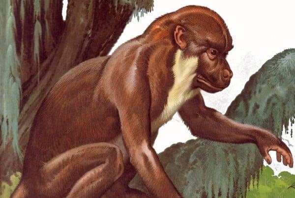 Aegyptopithecus 01
