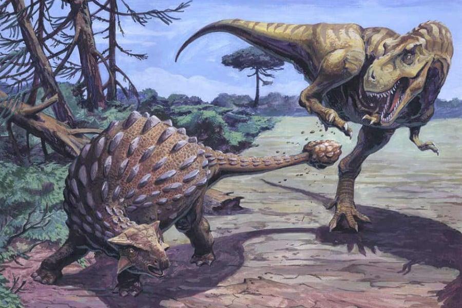 Ankylosaurus 01