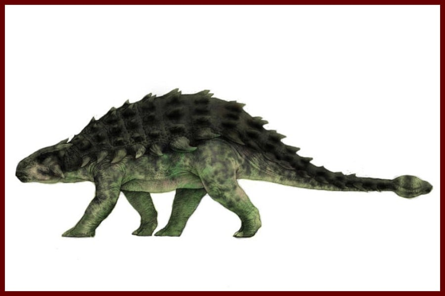 Ankylosaurus 1908