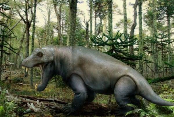 Anteosaurus 01