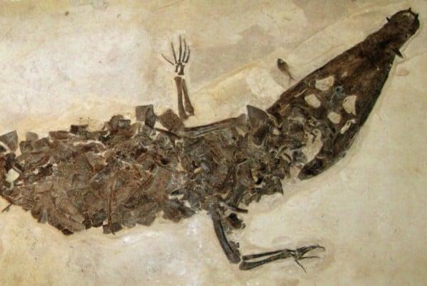 Borealosuchus 01
