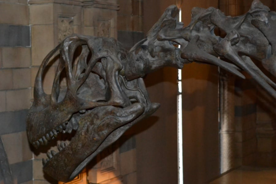 Camarasaurus 01