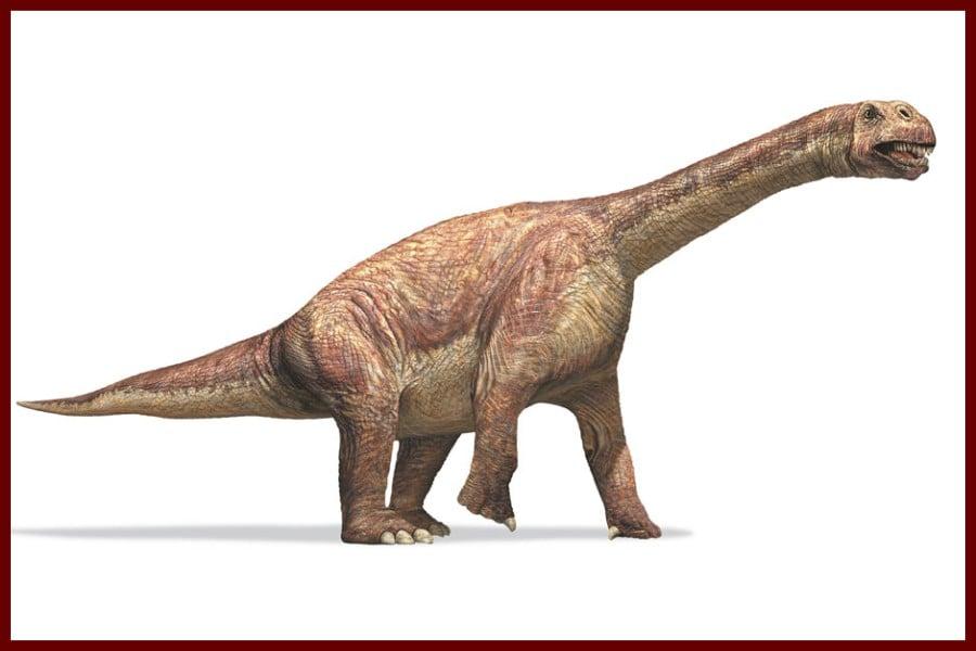 Camarasaurus 1877