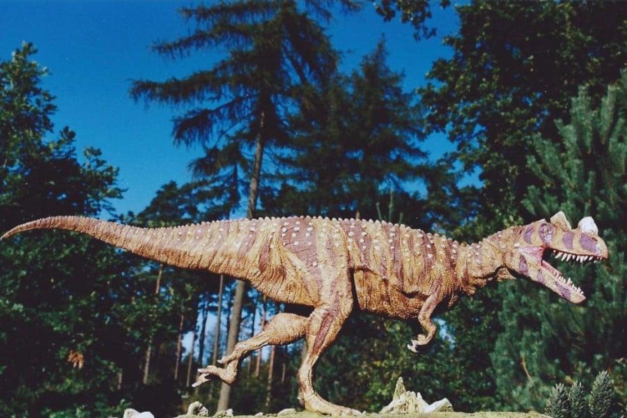 Ceratosaurus 01