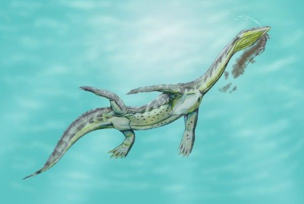 Ceresiosaurus 01