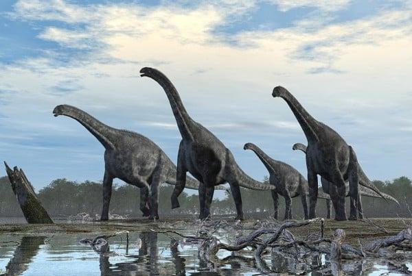 Cetiosaurus 01