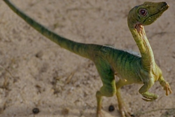 Compsognathus 01