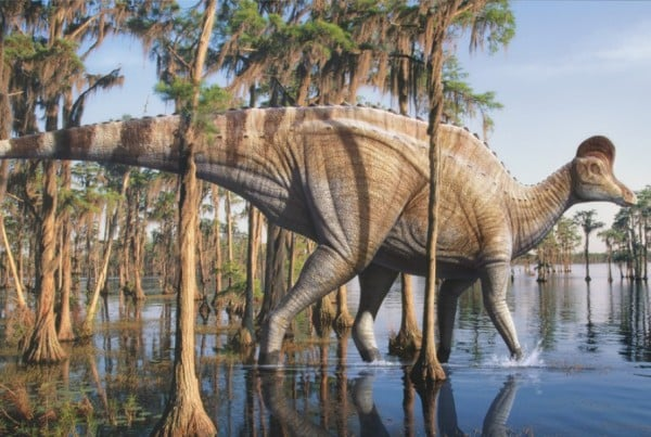 Corythosaurus 01