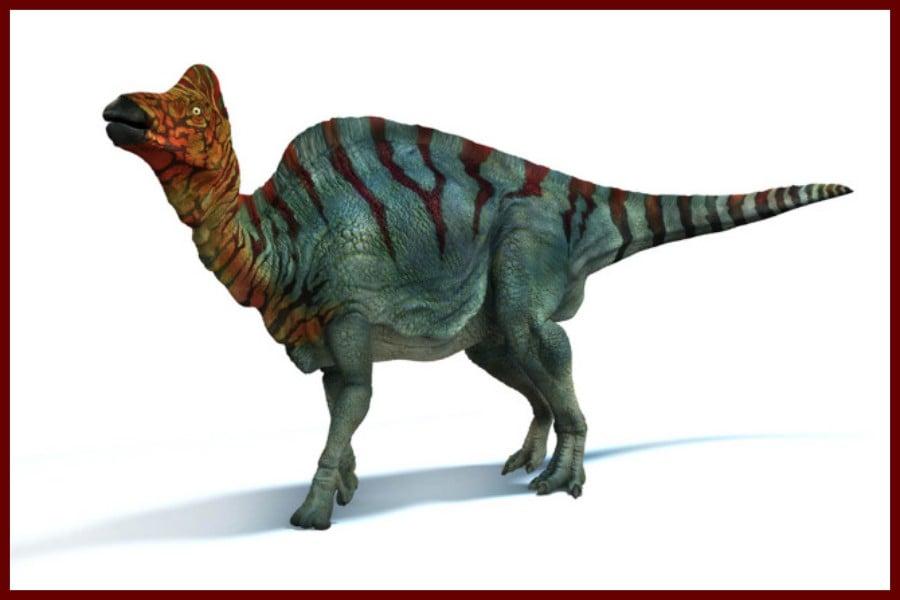Corythosaurus 1914