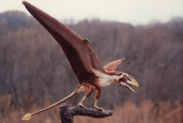 Dimorphodon 01
