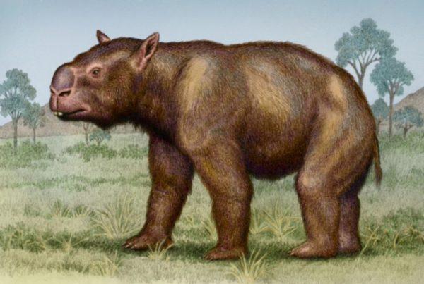 Diprotodon 01