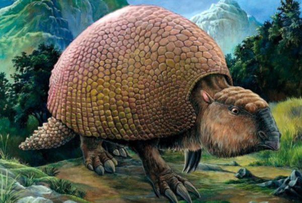 Glyptodon 01