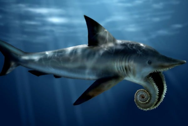 Helicoprion 01