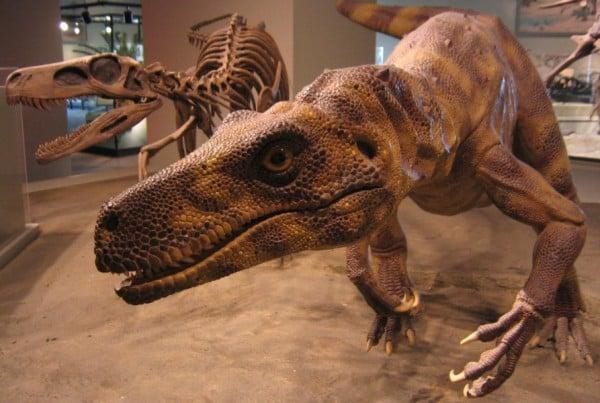 Herrerasaurus 01