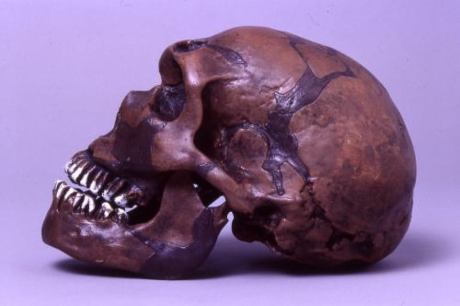 Hombre de Neanderthal 01