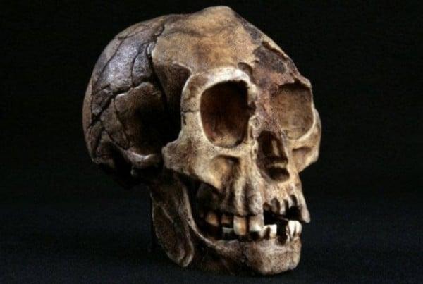 Homo Floresiensis 01