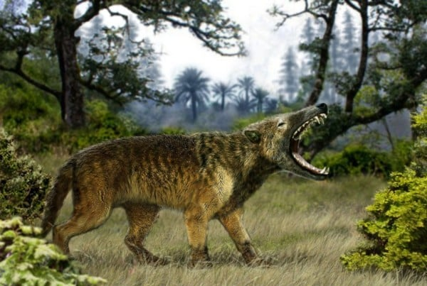 Hyaenodon 01