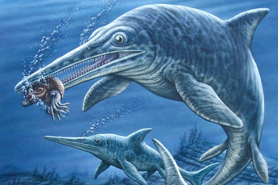 Ichthyosaurus 01