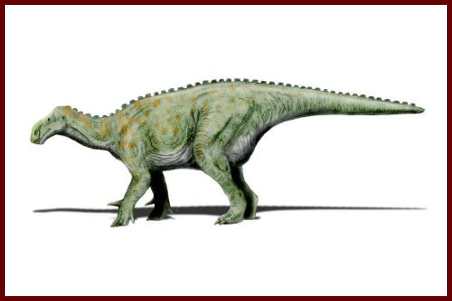 Iguanodon 1825