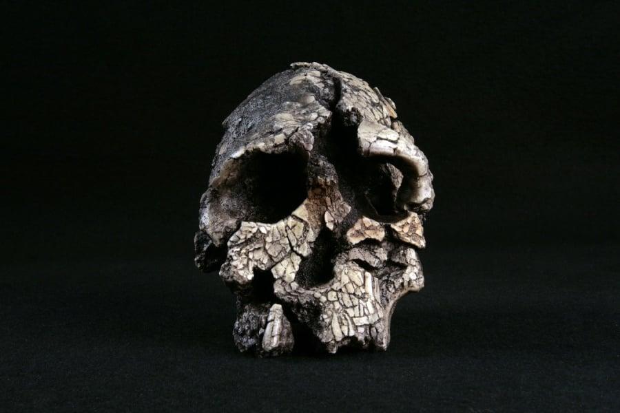 Kenyanthropus 01