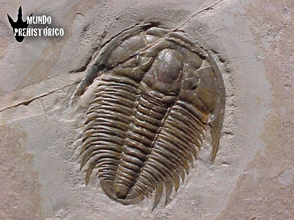 Los Fósiles 01
