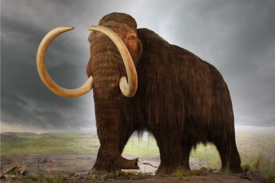 Mamut Amigos De Los Dinosaurios Y La Paleontologia Tenemos una muy buena idea de cómo era este enorme animal debido a los. mamut amigos de los dinosaurios y la
