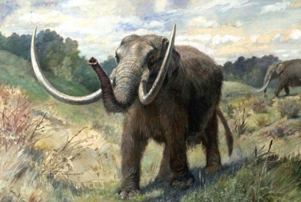 Mastodonte Americano 01