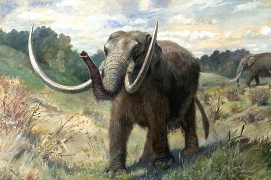 Resultado de imagen para mastodonte
