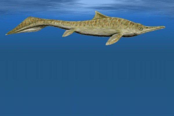 Mixosaurus 01