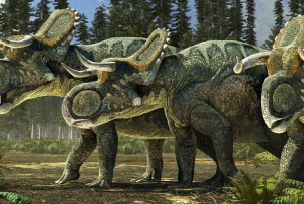 Nasutoceratops 01