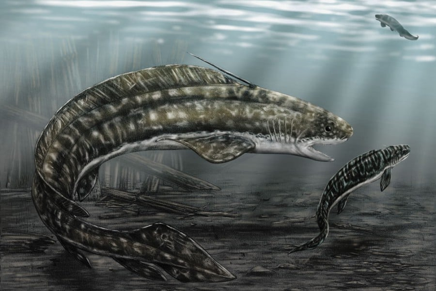 Orthacanthus 01