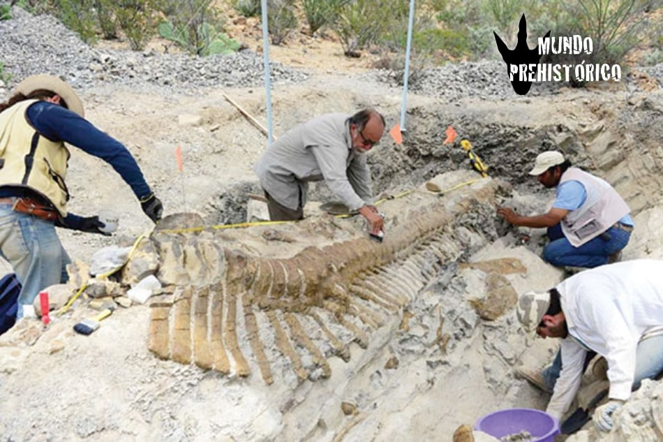 Paleontología 01