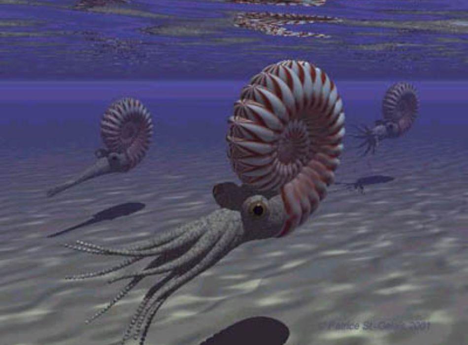 Paleozoico 04