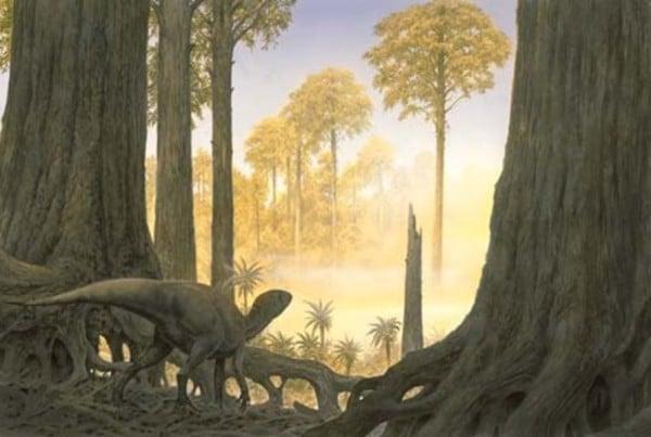 Pisanosaurus 01