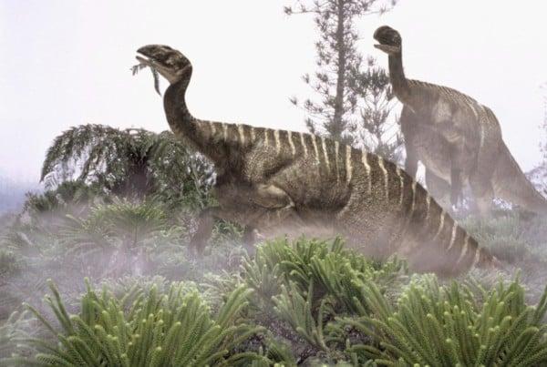 Plateosaurus 01