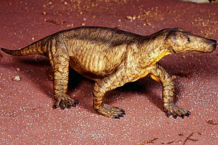 Procynosuchus 01