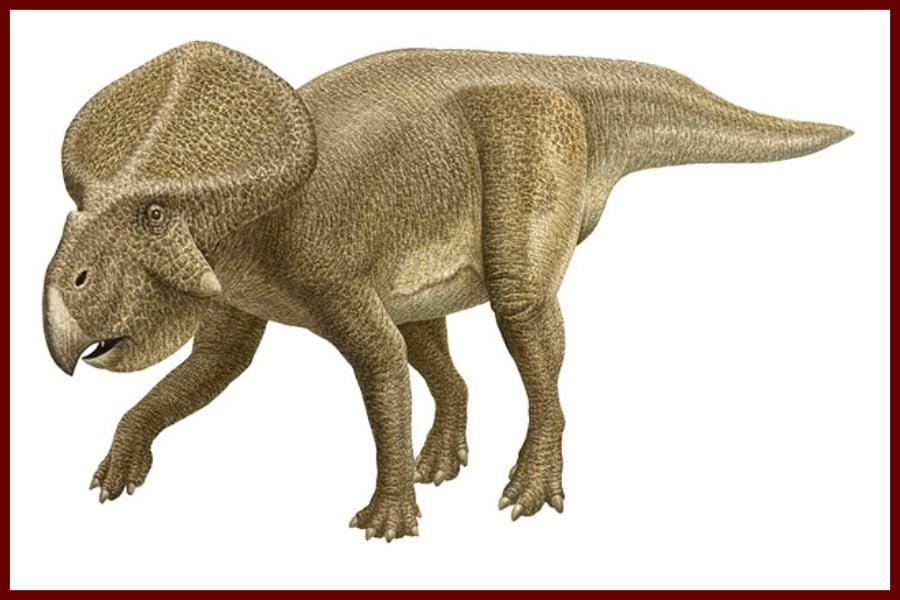 Protoceratops 1923