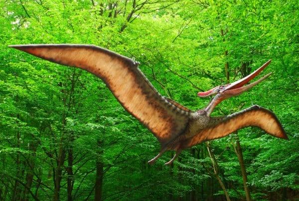 Pteranodon 01