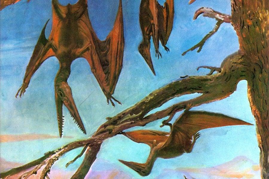 Pterodactylus 01