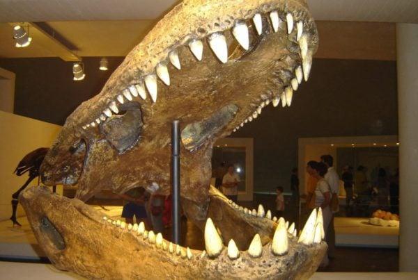 Purussaurus 01