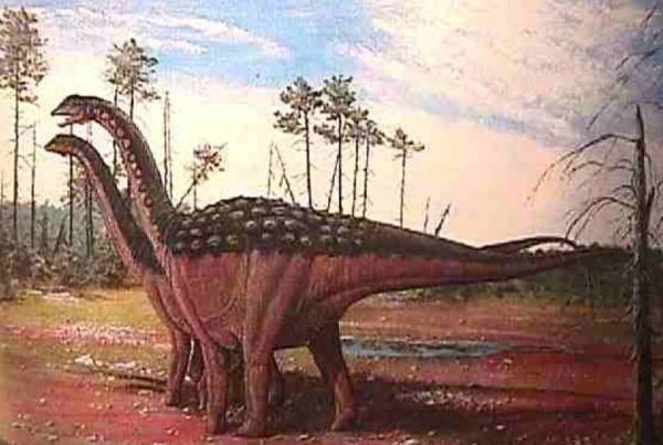Saltasaurus 01
