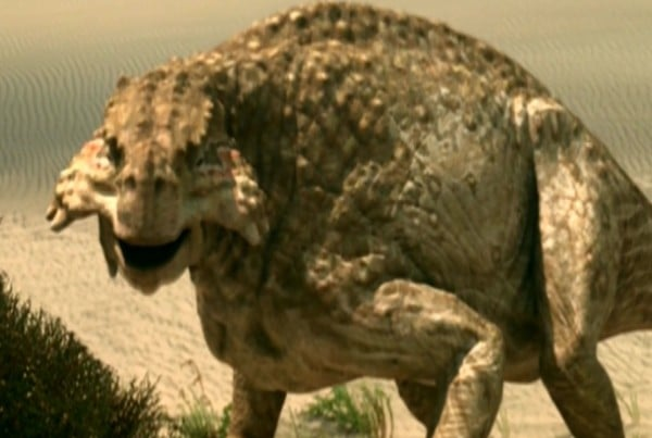 Scutosaurus 01