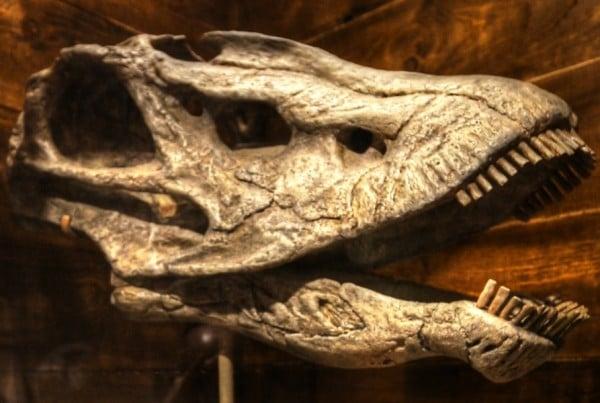 Seismosaurus 01