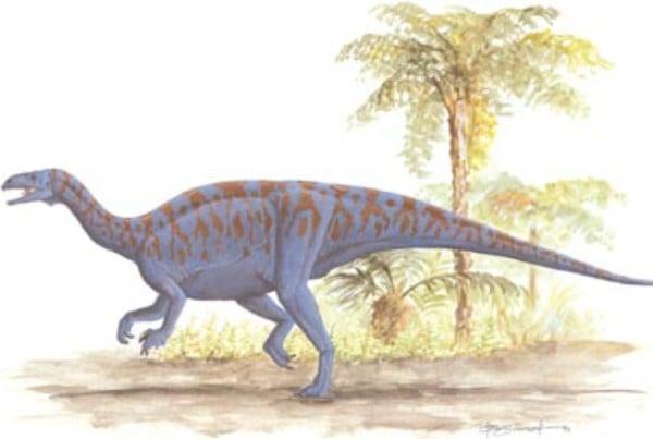 Sellosaurus 01