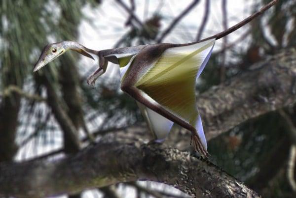 Sharovipteryx 01