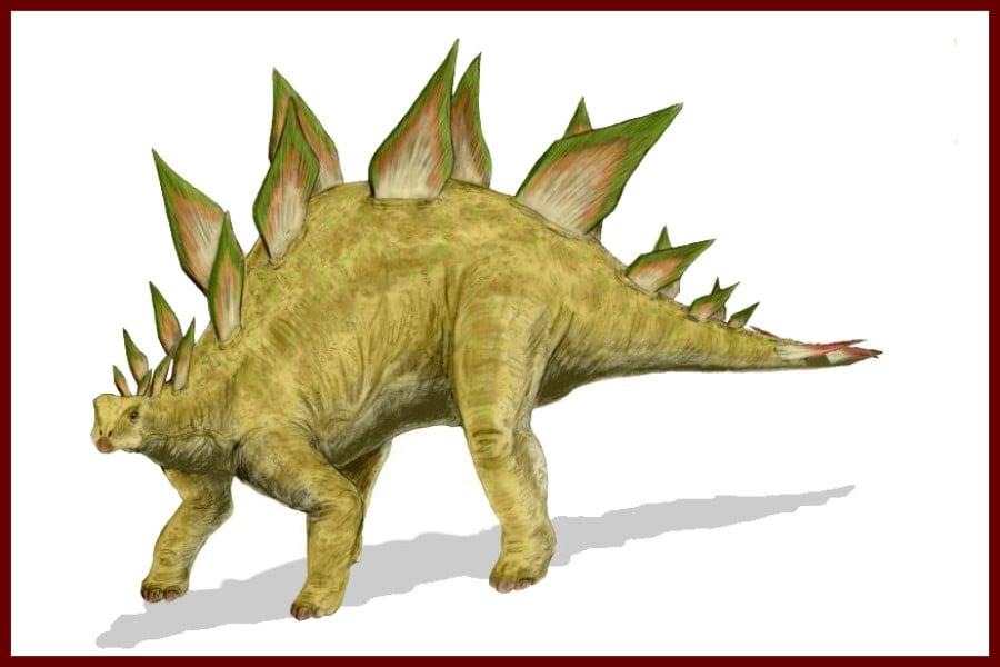 Stegosaurus 1877