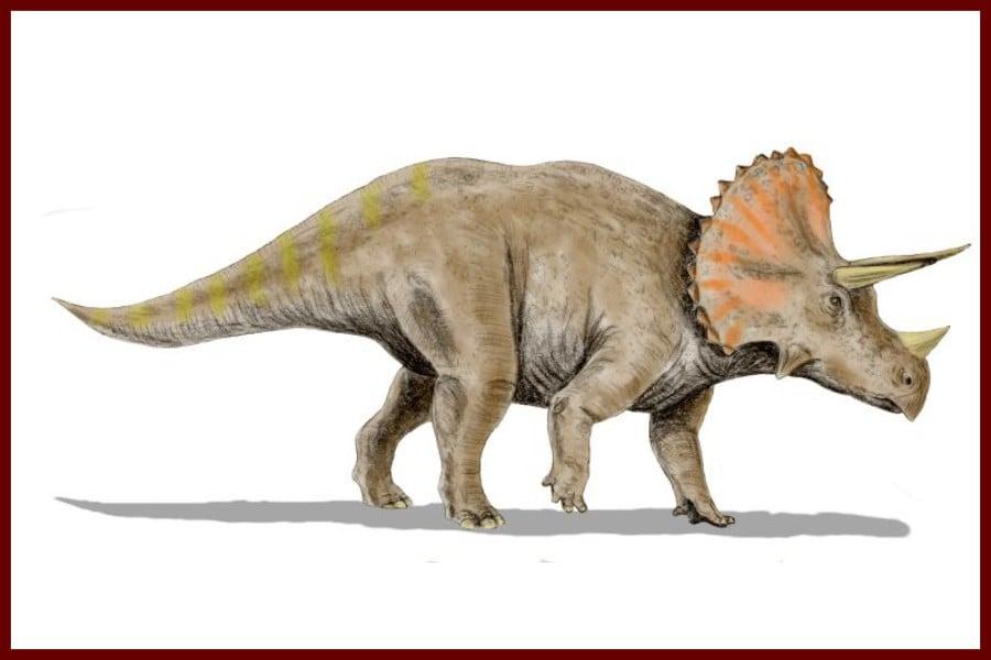 Triceratops 1889