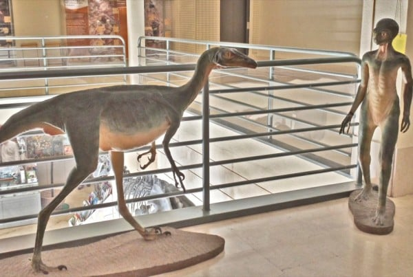 Troodon 01